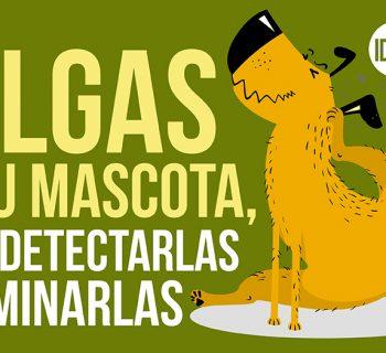 pulgas en tu mascota