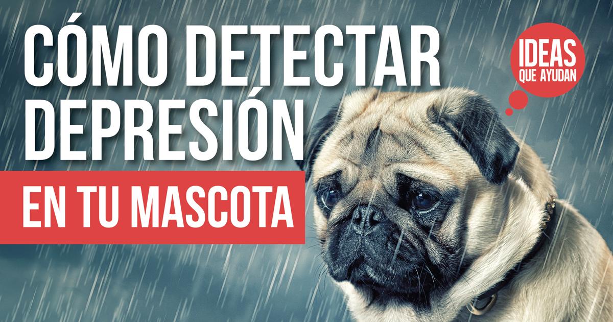 depresion en tu mascota