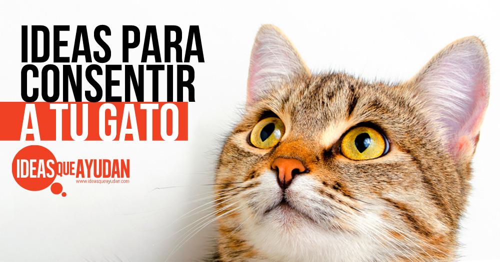 ideas para consentir a tu gato