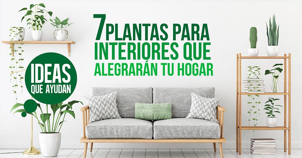 Plantas para interiores que alegrar n tu hogar for Cuales son las plantas para interiores
