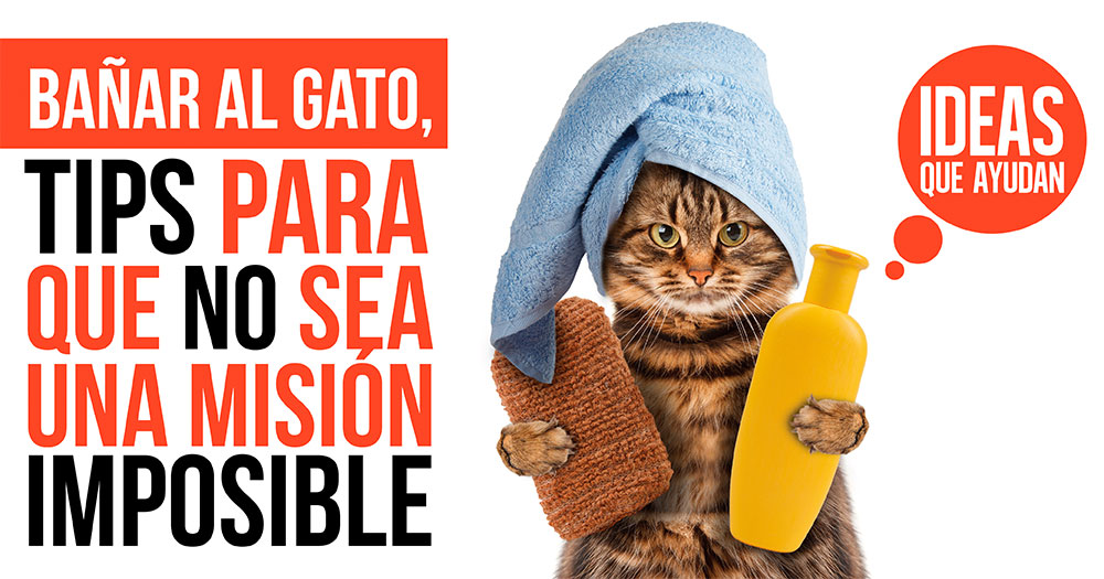 Ba ar al gato tips para que no sea una misi n imposible - Banar gatos ...