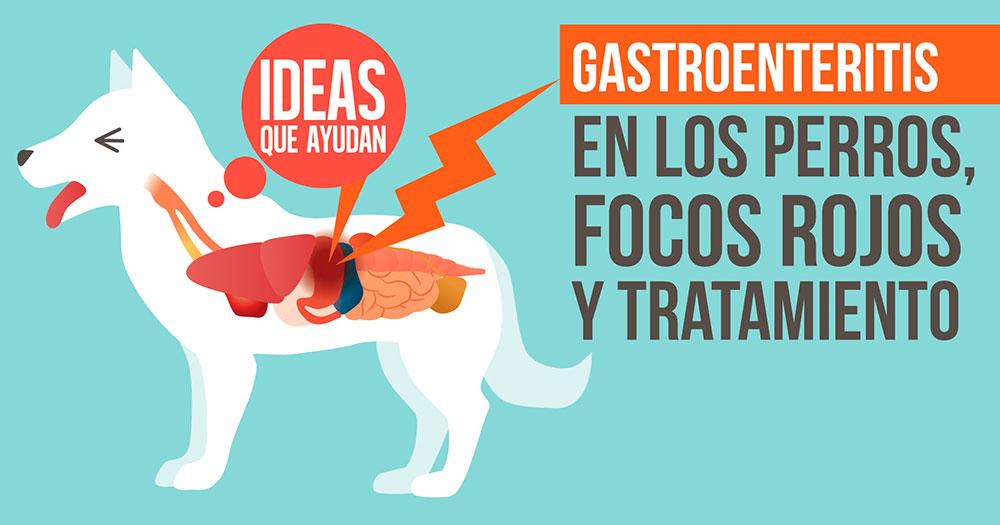 Gastroenteritis en los perros