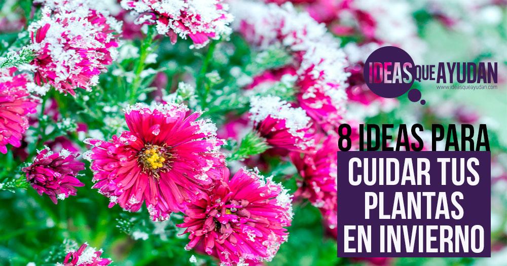7 ideas para cuidar tus plantas en invierno no las dejes morir - Plantas de invierno ...