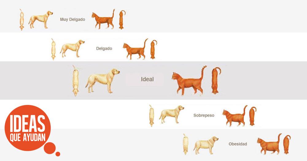 obesidad en perros