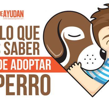 adoptar un perro