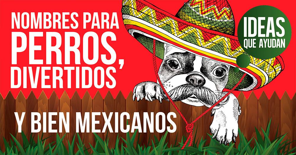 nombres para perros divertidos y bien mexicanos