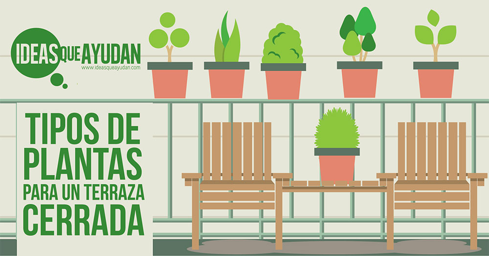 Tipos de plantas para una terraza cerrada