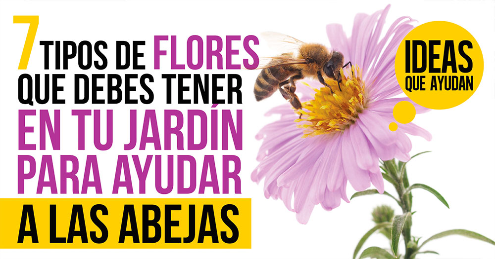 9bc91d0176fd 7 tipos de flores que debes tener en tu jardín para ayudar a las abejas