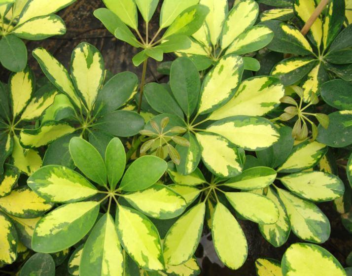 Tipos de plantas para una terraza cerrada decora y disfruta tus espacios - Plantas resistentes de interior ...