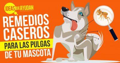 Remedios caseros para las pulgas de tus mascotas