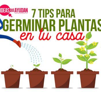 tips para germinar plantas en tu casa
