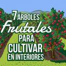 árboles frutales para cultivar en interiores