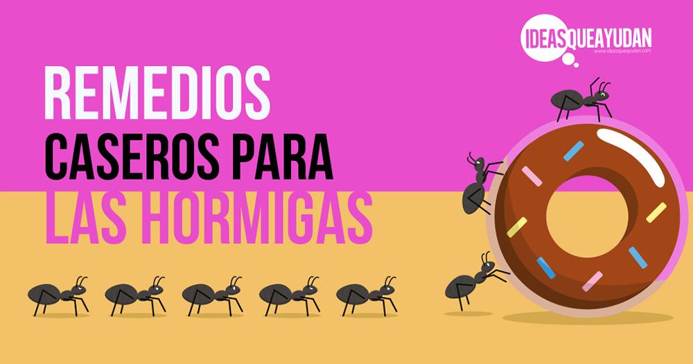 Remedios caseros para las hormigas